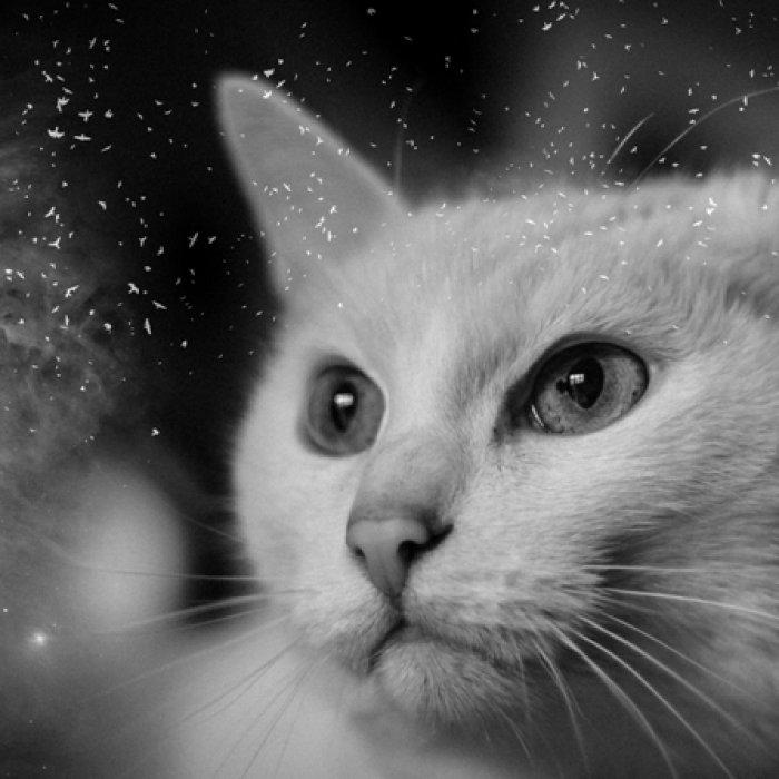 «Проза дождя». Александр Потапов - иллюстрации